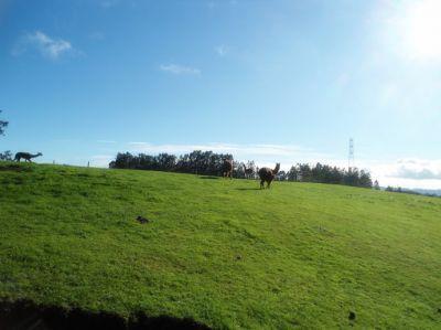 爱哥顿牧场