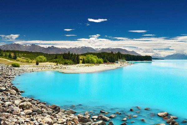 新西兰南北岛观鲸11日